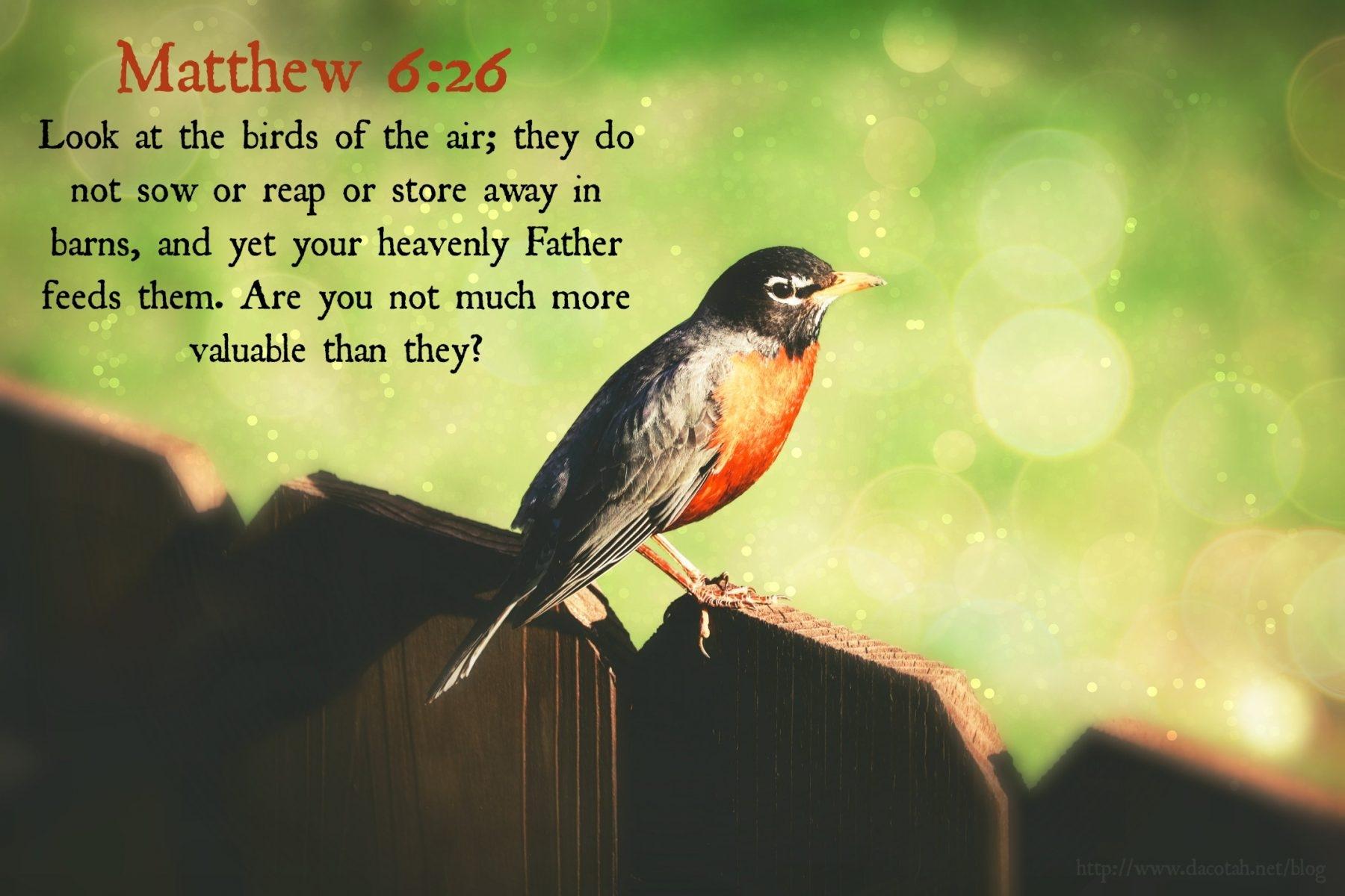 D2DL-Matthew6:26