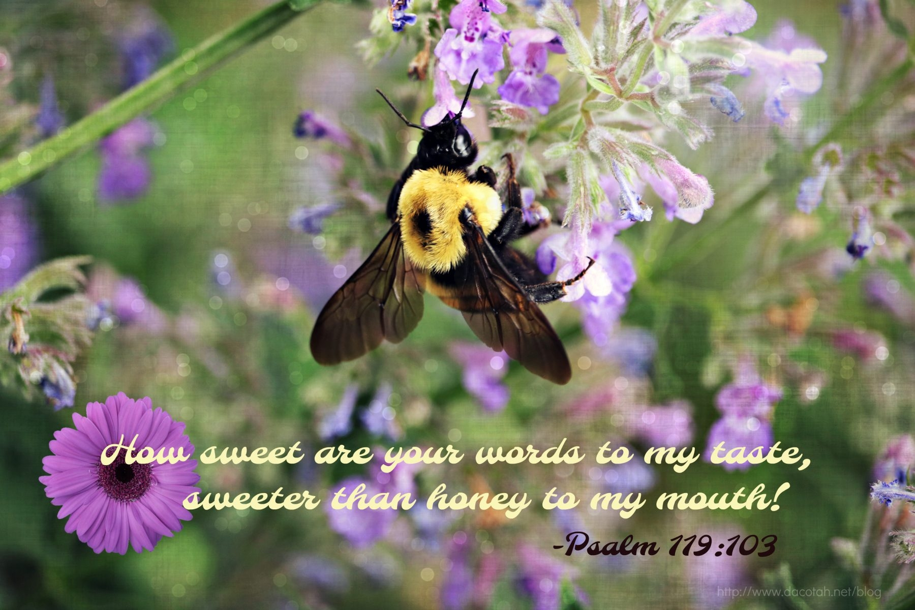 D2DL-Psalm119:103