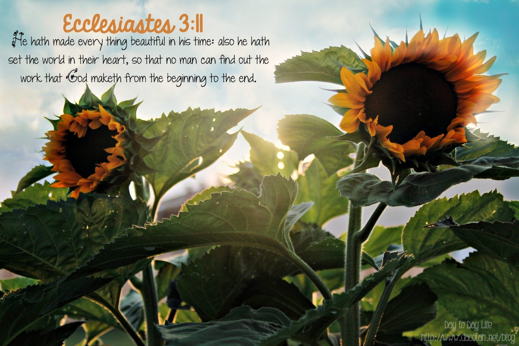 D2DL-Ecclesiastes3:11